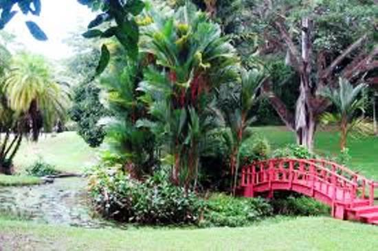 botanical_garden